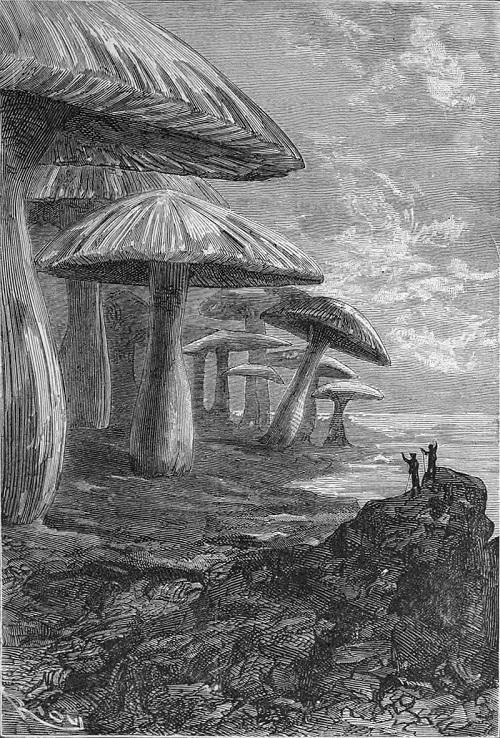 Dessin de Riou illustrant l'édition originale